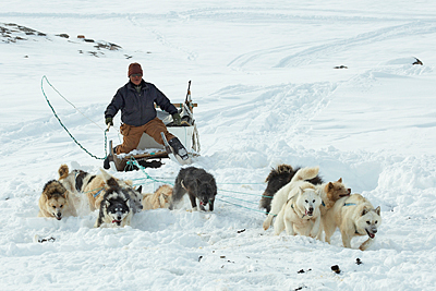 Inuit hunter on the dog sledge